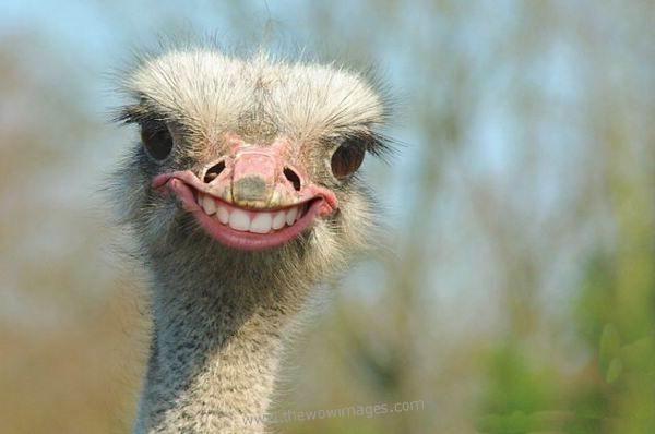 Image of: Smile Zebra Smile And Teeth 01animalswithhumanteeth Math Happenings Onmason Math Happeningssmile February Is Dental Awareness Day Math
